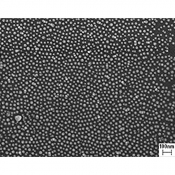 S20680-C AuSome™ Nanogold particles 38 nm for ultra high resolution test specimen on Si chips 5x5mm, on JEOL stub ᴓ9,5mm x h=9,5mm